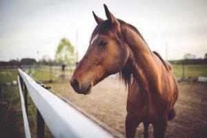 Equipamiento básico para Equitación